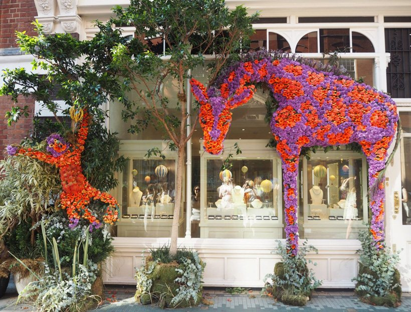 The Beauty of Chelsea in Bloom